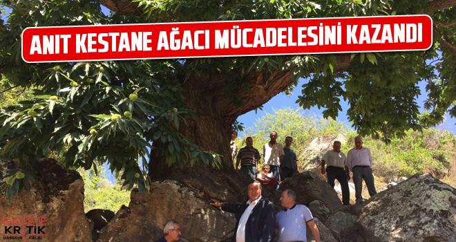 CHP MİLLETVEKİLİ GÜRER, ANIT KESTANE AĞACI MÜCADELESİNİ KAZANDI