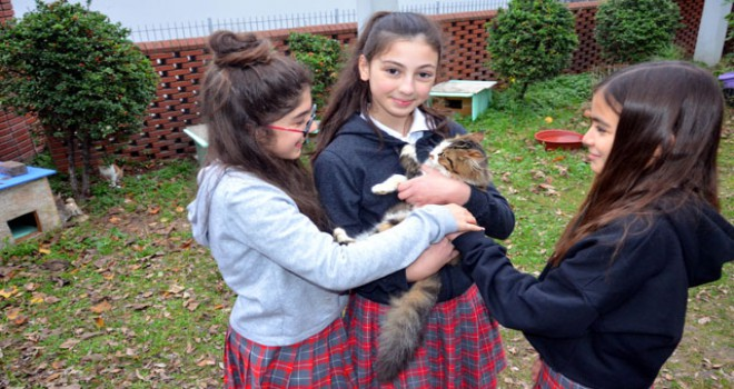 Avcılar'da öğrencilerden okul bahçesine 7 kedi evi