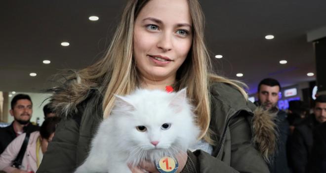 Türkiye'nin en güzel  kedisi belli oldu