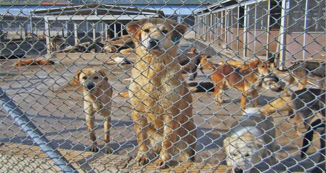 Prof. Dr. Sungur: Her dakikada 70 milyon hayvan şiddet görüyor