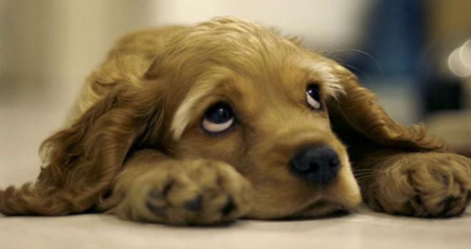Evcil hayvanını sokağa terk edene ceza geliyor