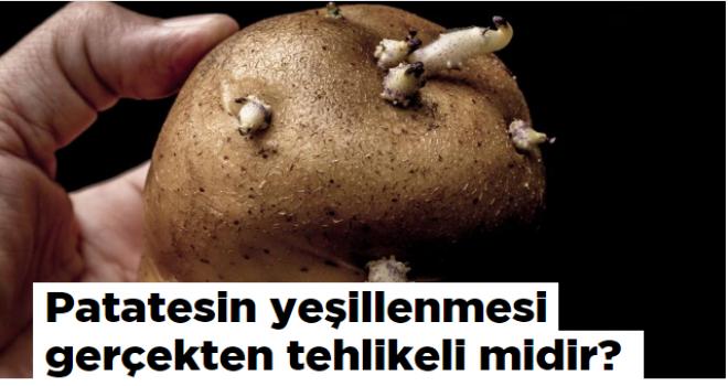 Patatesin yeşillenmesi gerçekten tehlikeli midir?