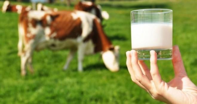 Üreticiye, süt prim desteği artırıldı