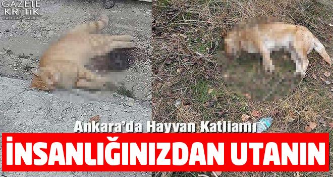 Ankara'da hayvan katliamı, 'İnsanlığınızdan utanın'