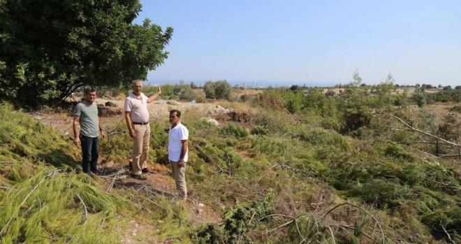Mersin'de hazine arazisinde ağaç katliamı!