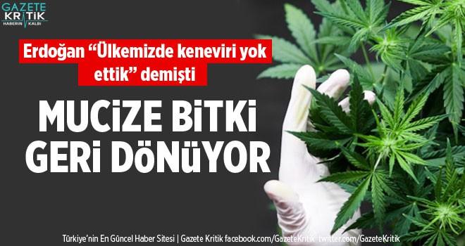 Türkiye kenevir üretimi için harekete geçti