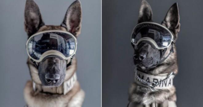 Meksikalıların gurur duydukları 'kahraman köpekler'