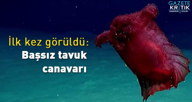 Güney Okyanusu'nda ilk kez görüntülendi: Başsız tavuk canavarı