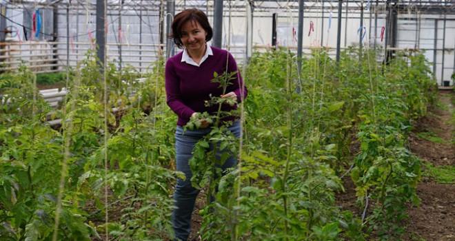2 Milyon Euro'luk AB projesi ile domates sektörüne yenilikçi çözümler aranacak