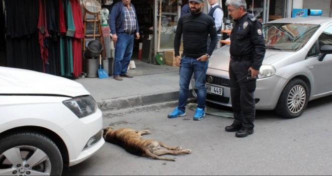 Otomobilin üzerine 5´inci kattan köpek düştü