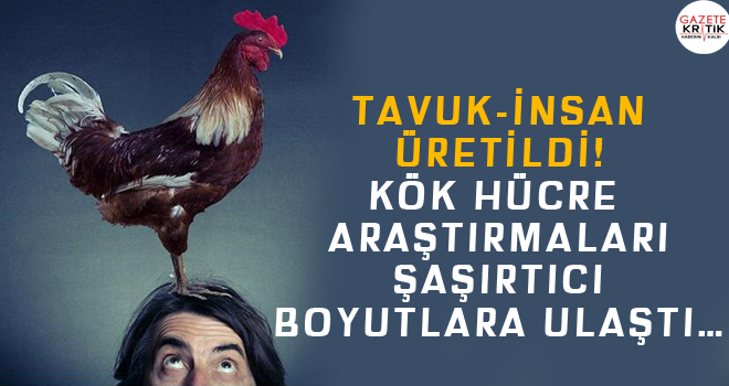 Tavuk-insan üretildi! Kök hücre araştırmaları şaşırtıcı boyutlara ulaştı…