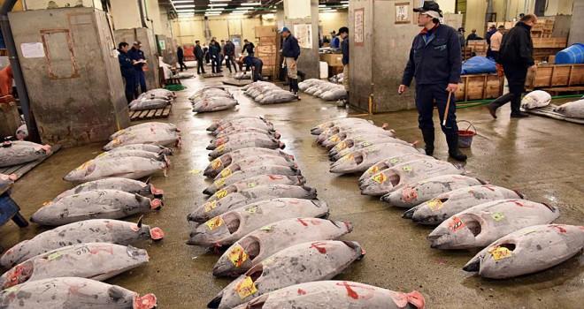 Dünyanın en büyük balık pazarı Tsukiji tarihi mekanına veda etti