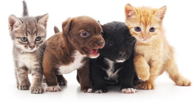 'AK Parti'de hayvan hakları çalışması hız kesti:...