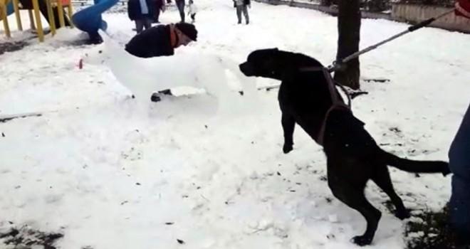 Köpek, kardan köpeğe saldırmaya çalıştı