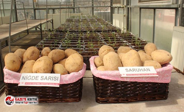 Niğde'de 2 milli patates çeşidi daha tescillendi