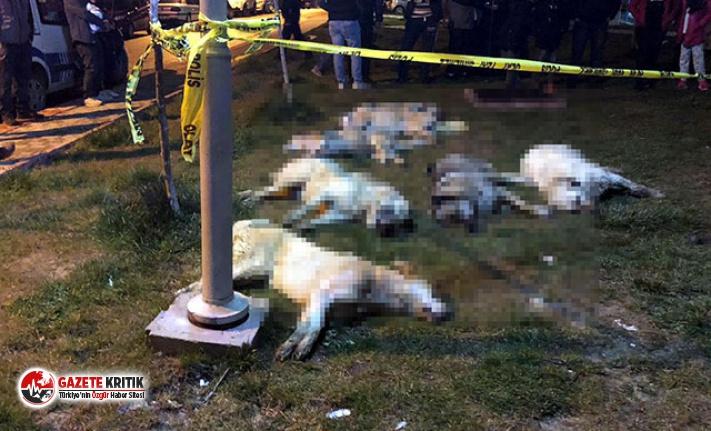 Ankara'da 16 köpeğin öldürülmesinde 3 kişiye...