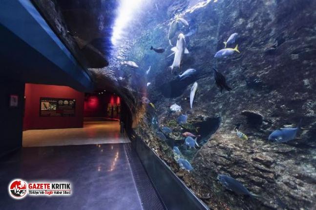 Dünyanın en büyük akvaryumunda yılda 25 ton balık...