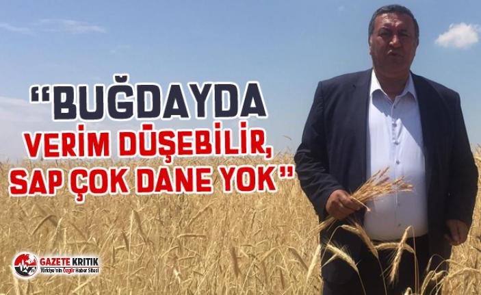 """CHP'li Gürer: Buğdayda """"yel vurgunu"""" çiftçiyi perişan etti"""