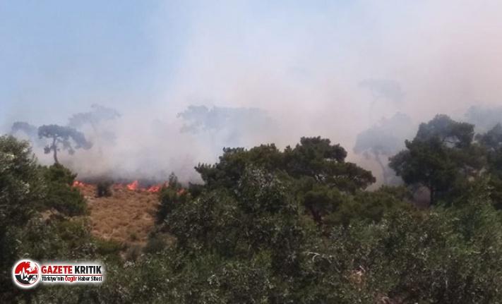 Madra Dağı'nda orman yangını