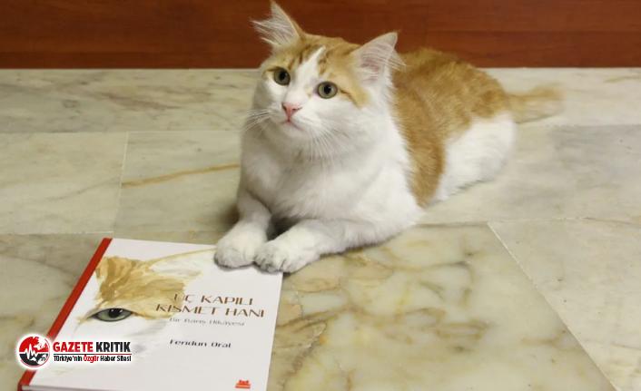Savaştan kurtarılan 'Barış' kedinin hikâyesi kitap oldu