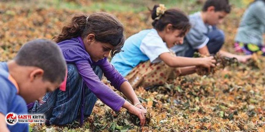 Türkiye'de çocuk işçi sayısı 2 milyona...