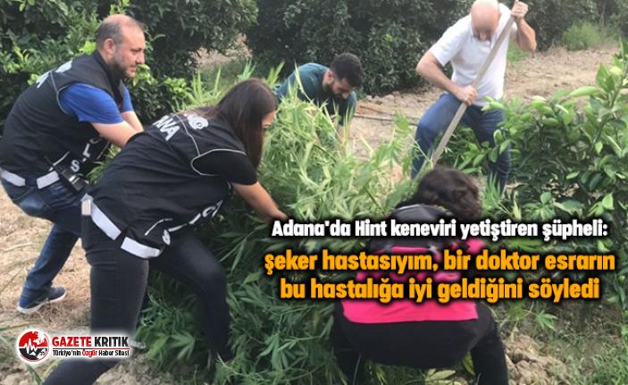 Adana'da Hint keneviri yetiştiren şüpheli:...