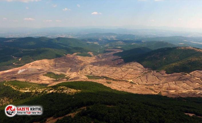 Altın madeni için Kazdağları'nda ağaç katliamı...