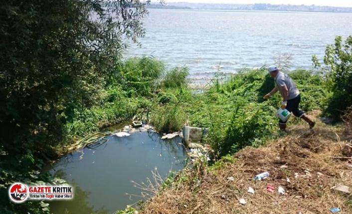 İstanbul'da görülen Batı Nil virüsünün yayılma nedeni ortaya çıktı