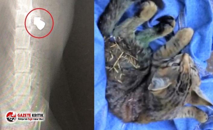Kediyi önce tüfekle vurdular, sonra işkenceyle...