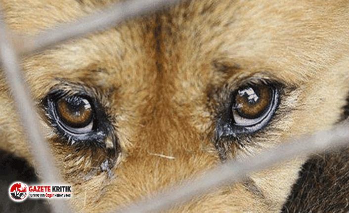 Köpeklere kürekle vuran kadına 750 TL para cezası verildi