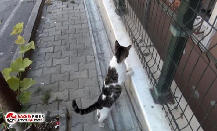 Apartman boşluğuna düşen yavru kedi için mahalleli...