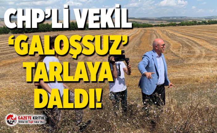 CHP'Lİ VEKİL 'GALOŞSUZ' TARLAYA DALDI!