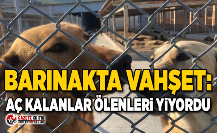 """Diyarbakır hayvan barınağında mamaları..."