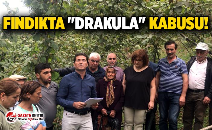 """FINDIKTA """"DRAKULA"""" KABUSU! CHP'Lİ KAYA YETKİLİLERİ GÖREVE ÇAĞIRDI"""