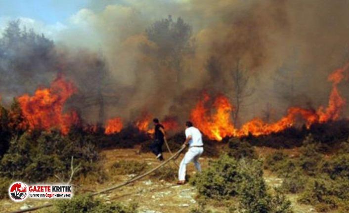 HKP İzmir İl Örgütü'nden orman yangınlarıyla...