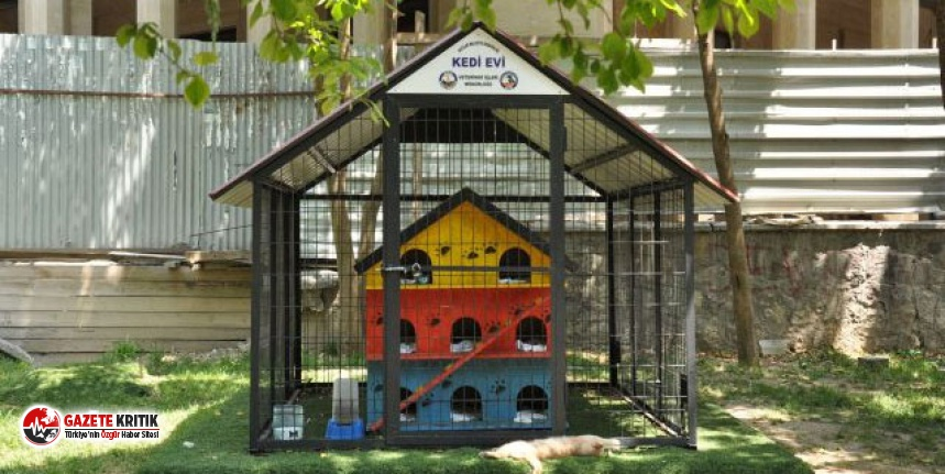 Avcılar Belediyesi'nden kedi evleriyle ilgili karar