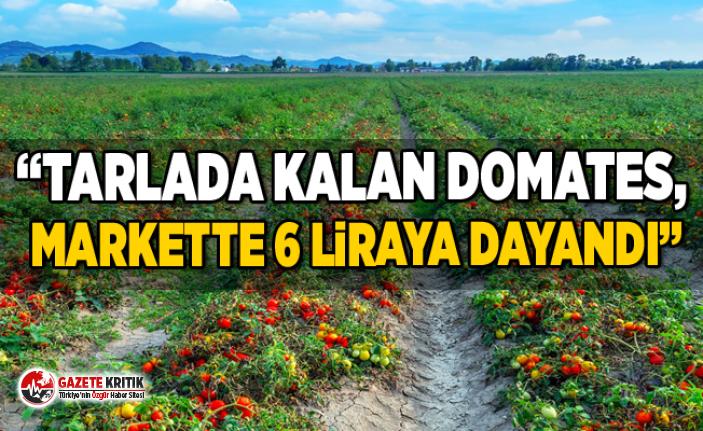 """CHP'li Gürer, """"Tarlada kalan domates, markette 6 liraya dayandı"""""""