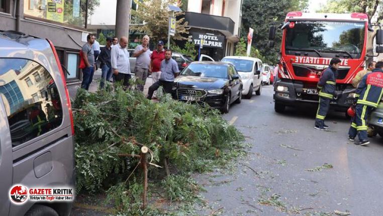Fatih'te şiddetli rüzgar; ağaç dalları araçların...
