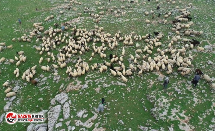 Kayalıklardan düşüp yaralanan Afgan çobanı köylüler...