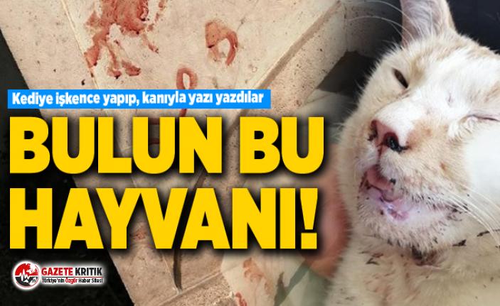 Kediye işkence yapıp, kanıyla yazı yazdılar