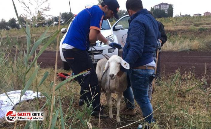 Rögar kuyusuna düşen koyunu AFAD kurtardı