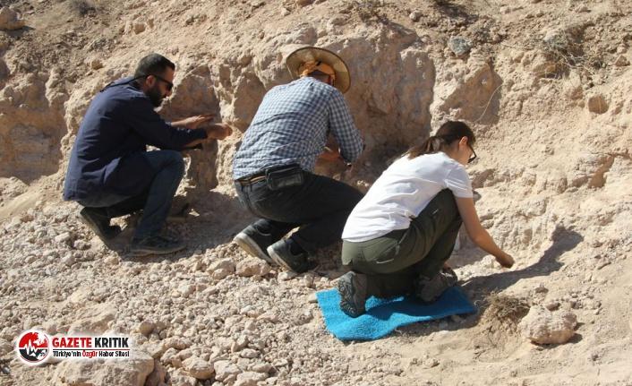 8 Milyon Yıllık Fosiller Bulundu