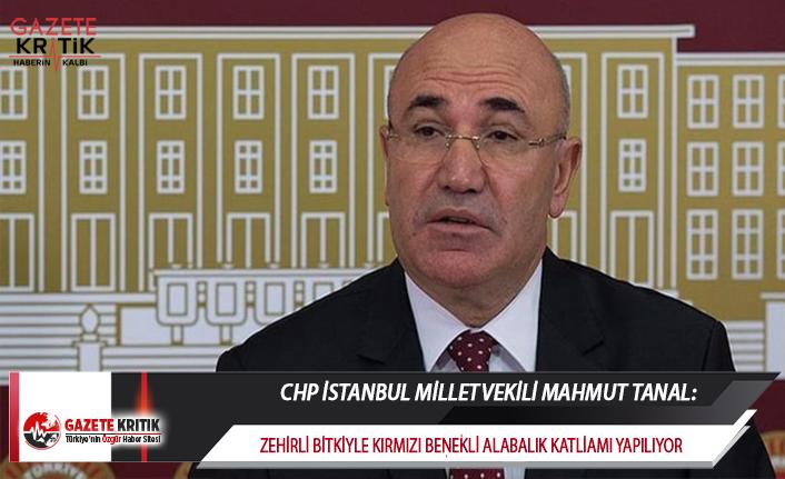 CHP'Lİ TANAL:ZEHİRLİ BİTKİYLE KIRMIZI BENEKLİ...