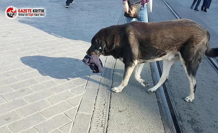 Taksim'deki Köpek 2'nci Kez Isırdı!