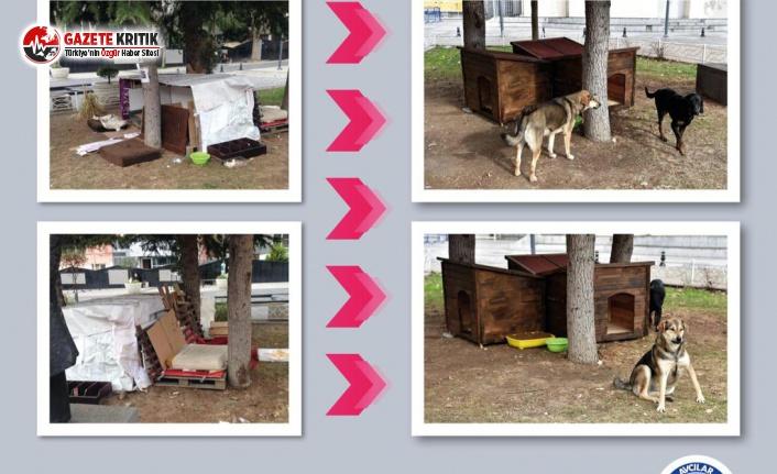 Avcılar Belediyesi sokakta yaşayan köpekler için ilçedeki parklara yeni kulübeler yerleştirdi