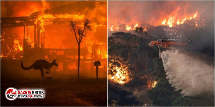 Aylarca sönmeyen yangınların korkunç bilançosu açıklandı!