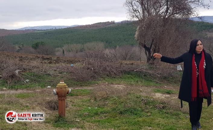 """CHP Tekirdağ Milletvekili Candan Yüceer: """"Bu Talana..."""