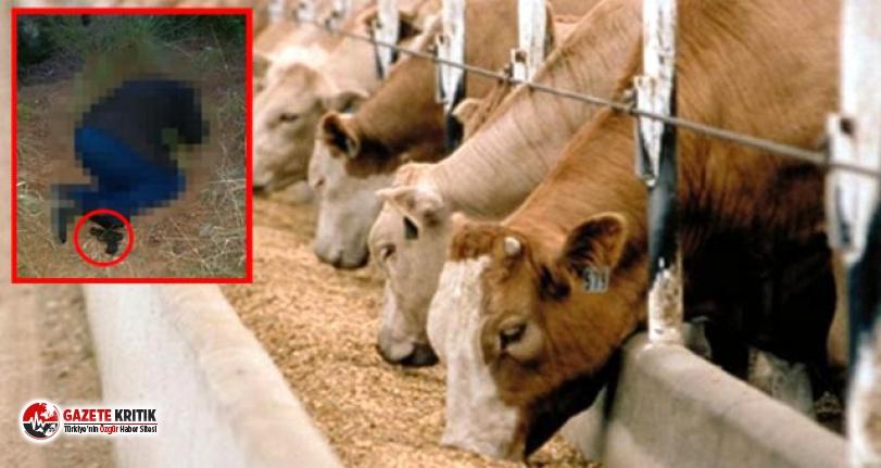 Krediyle aldığı hayvanları hastalanan muhtar intihar etti