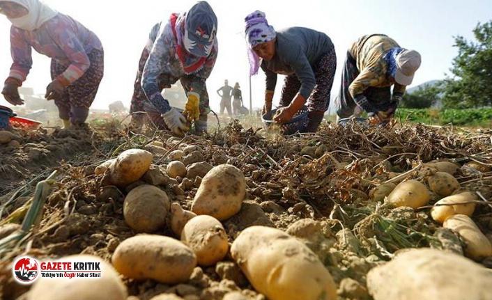 Tarım ve Orman Bakanı Pakdemirli açıkladı: Hazine arazilerini tarıma açıyoruz