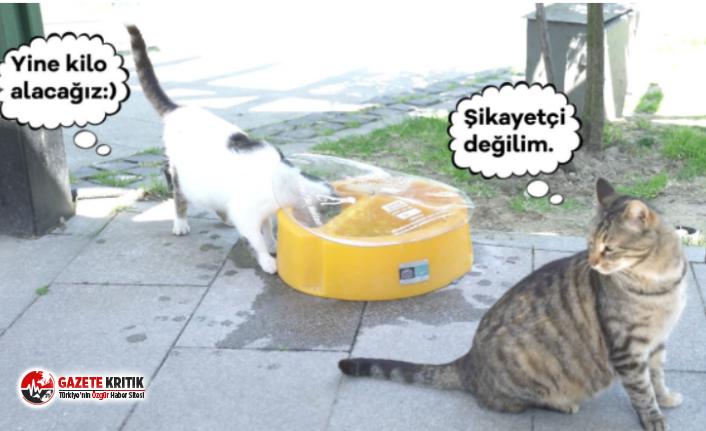 Beşiktaş'ın Sokaklarına Korunaklı Su ve Mama Kapları Yerleştirildi!